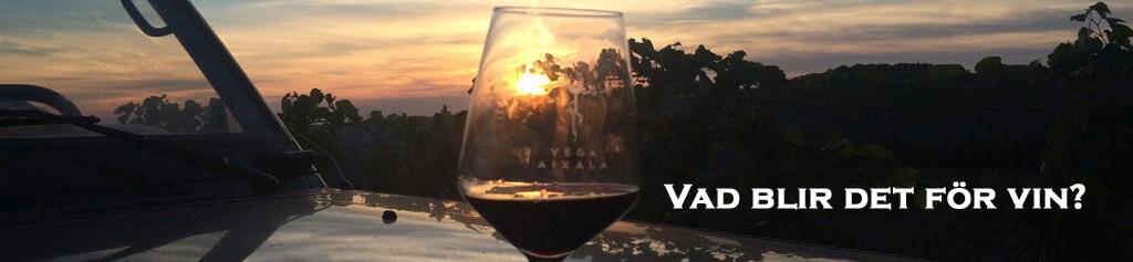 vinprovning - vin och mat